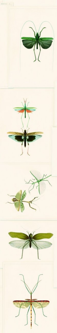 Entomology wallpaper green