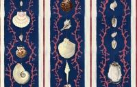 Premium wallpaper Coquillage blue