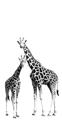 mural giraffes