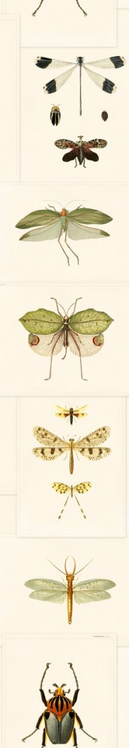 Entomology wallpaper