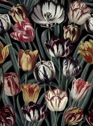 Tulipa Dark