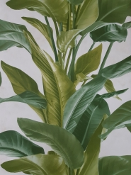 papier peint plante verte