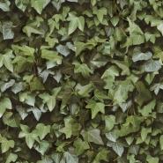 Ivy wall wallpaper