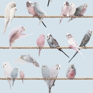 Exotic lovebirds blue wallpaper