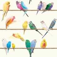Exotic lovebirds wallpaper