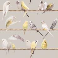 Exotic lovebirds grey yellow wallpaper