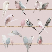 Exotic lovebirds pink blue wallpaper